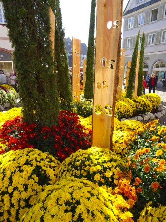 Lahr, Allemagne : Chrysanthema 3