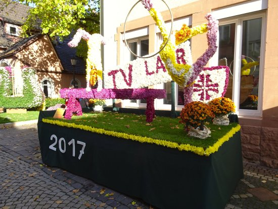 Lahr, Allemagne : Chrysanthema 5