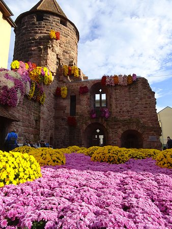 Lahr, Allemagne : Chrysanthema 6