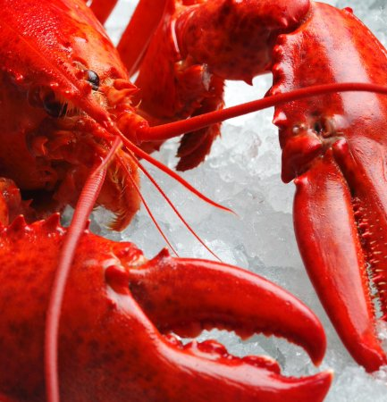 Seafood Restaurants Near Port Chester Ny
