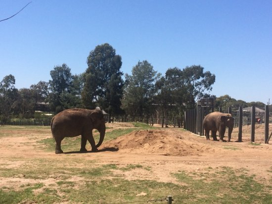 how to get to dubbo zoo