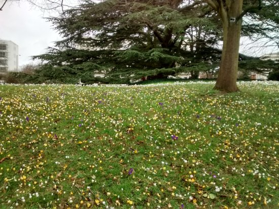 A bank of spring flowers in the grass picture of jephson gardens jephson gardens a bank of spring flowers in the grass mightylinksfo