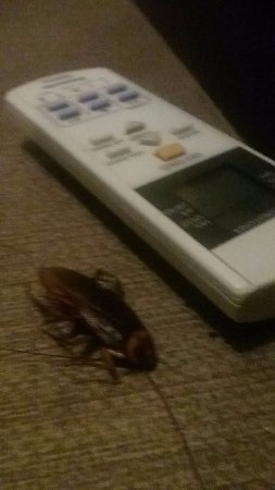 Goldberry Suites & Hotel: killed this thing after it crawled in bed with me