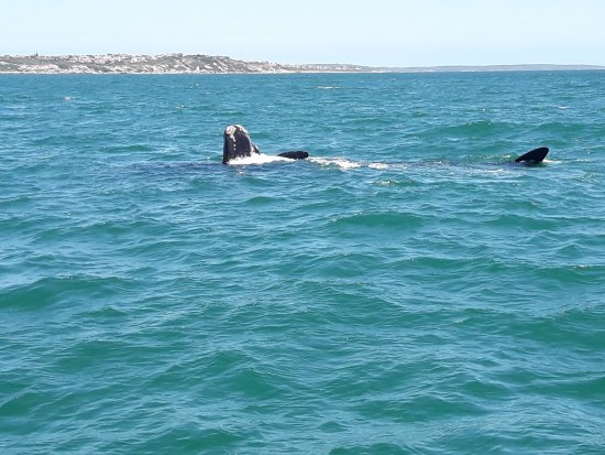 Ivanhoe Sea Safaris: whales just 10 meters from us!