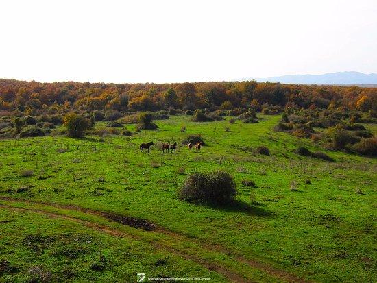 Farnese, Italia: Cavalli allo stato brado in località Semonte nella Selva del Lamone