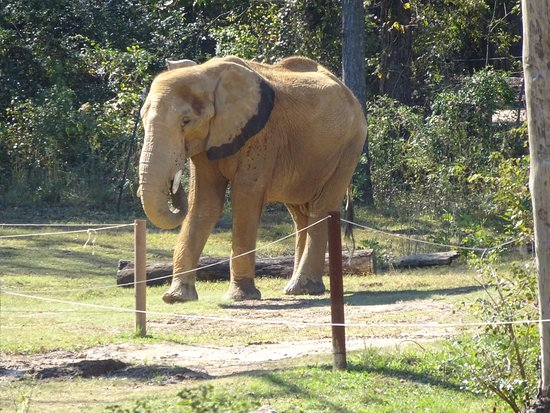Birmingham Zoo: The elephants were very active