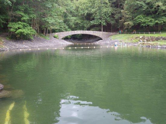 Moravia, NY: swimming hole