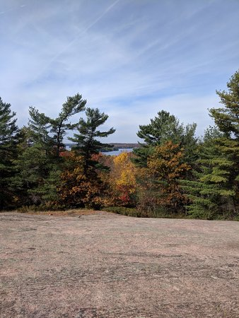 Muskoka Lakes, Canada: random tress along out walk