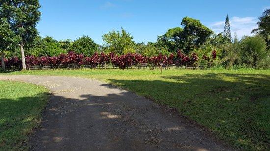 Kilauea, HI: beautiful foilage everywhere