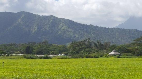 Kilauea, HI: The majestic mountains surround you