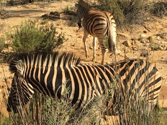 Aquila Private Game Reserve Foto