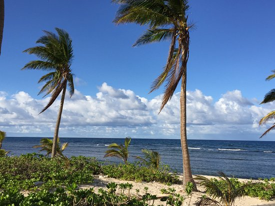 The Palms at Pelican Cove: Still many Palms after Maria. Great view.