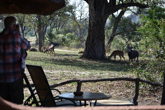 Mala Mala Private Game Reserve, South Africa: taking photos of wildlife off the back porch