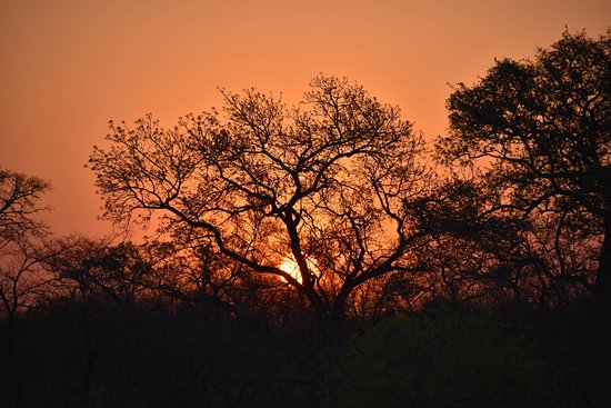 Mala Mala Private Game Reserve, South Africa: sunset on a game drive