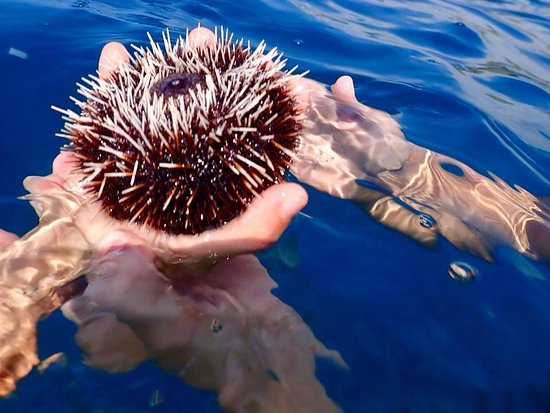 Kawaihae, Χαβάη: Ashley handing out a sea urchin to my 8 years old -