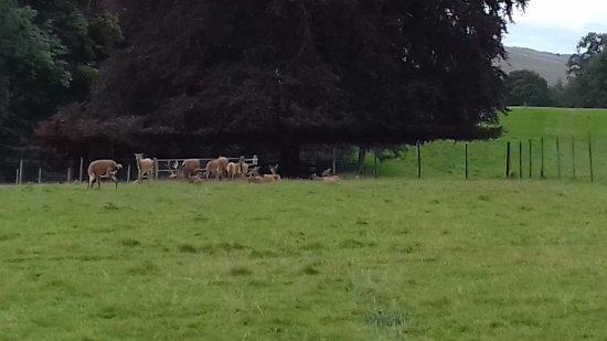 Blair Atholl, UK: Deer Park