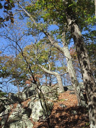 Dickerson, MD: Beautiful weather makes for wonderful hiking on the Blue Trail.