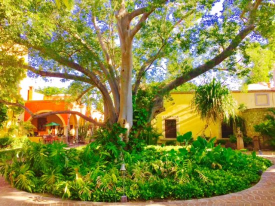 Alamos, Mexico: Incredible vegetation all over the hotel.
