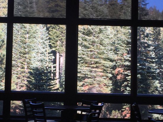 Wuksachi Lodge: View into the forest from the Wuksachi Dining Room