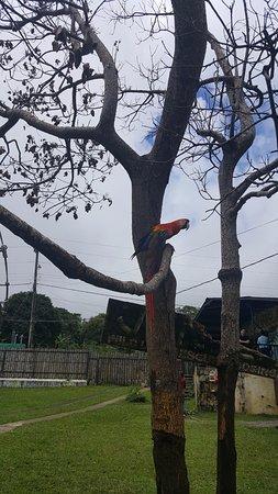 Jungla de Panama Wildlife Refuge: A beautiful bird.