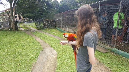 Jungla de Panama Wildlife Refuge: Eating a peanut!