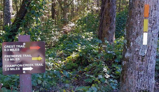 Three trails with easy to follow blazes. Easy access off of Hwy 136 north of Jasper.