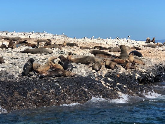 Stanley Seal Cruises: photo1.jpg
