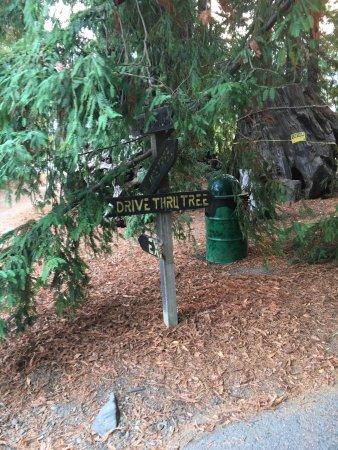 Weott, Kalifornien: photo4.jpg