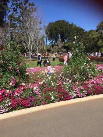 Toowoomba, Australia: photo3.jpg