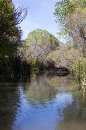 Cottonwood, AZ: The Verde River