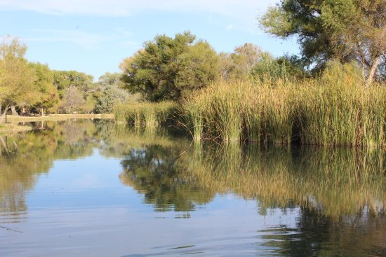 Cottonwood, AZ: One of the three lagoons, Fully stocked and frequented by beaver and otters