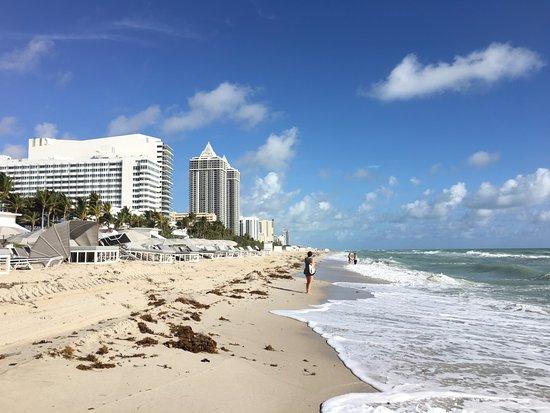 Palms Hotel Miami Beach Tripadvisor