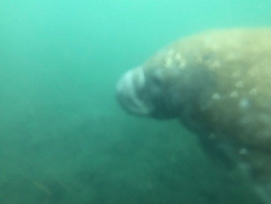 Captain Mike's Swimming with the Manatees : photo0.jpg