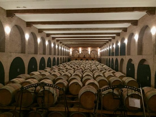 Neive, Italy: The aging wine cellar