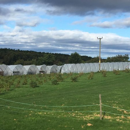 Nairn, UK: The polytunnels- where the magic happens