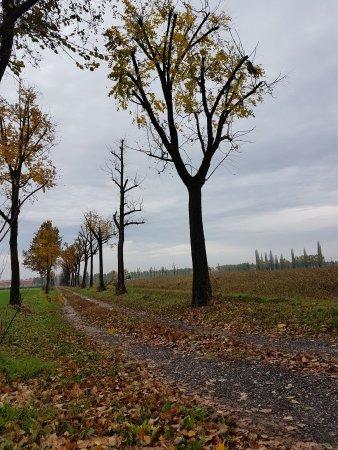 Carpenedolo صورة فوتوغرافية