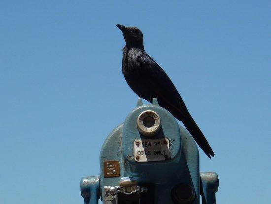 Zululand, جنوب أفريقيا: A friendly bird at Hilltop