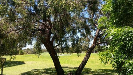 The Vines, Australia: 20171104_105016_large.jpg