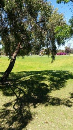 The Vines, Australia: 20171104_102236_large.jpg