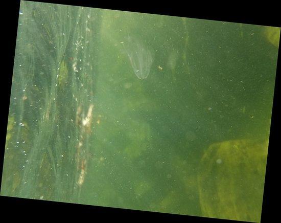 Lake Park, GA: 20171104_095629_large.jpg