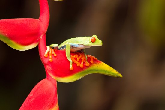 Puerto Viejo de Sarapiqui, Costa Rica: Some of the species you'll be able to observe during the Safari