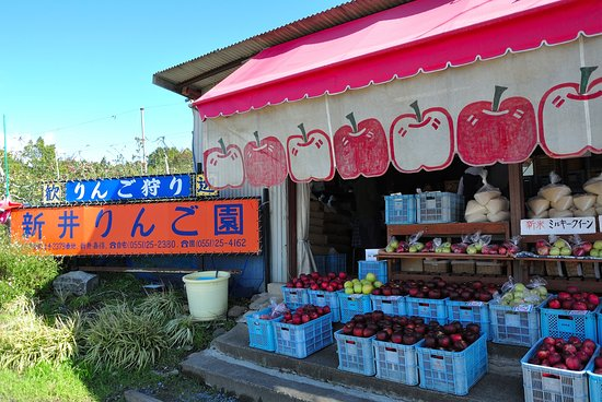 Arai Apple Orchard