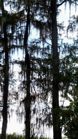 Westwego, لويزيانا: Ultimate Swamp Adventures