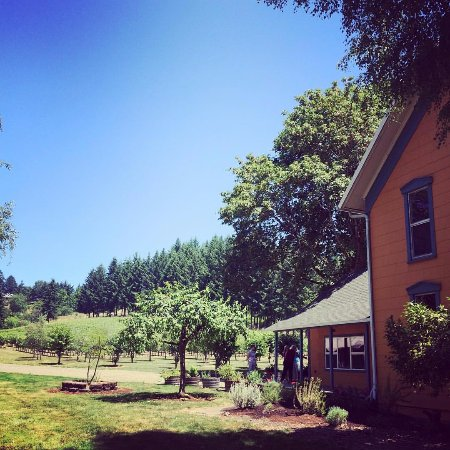 Dayton, OR: Remy Wines tasting room and Lone Madrone vineyard