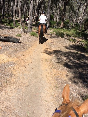 Gidgegannup, Australia: Riding along the bushland trail