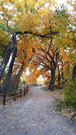 Santa Ana Pueblo, نيو مكسيكو: walking path to Rio Grande, fall foliage