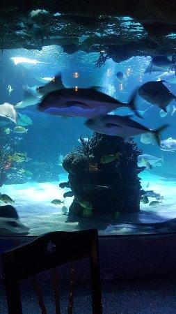 写真Downtown Aquarium枚