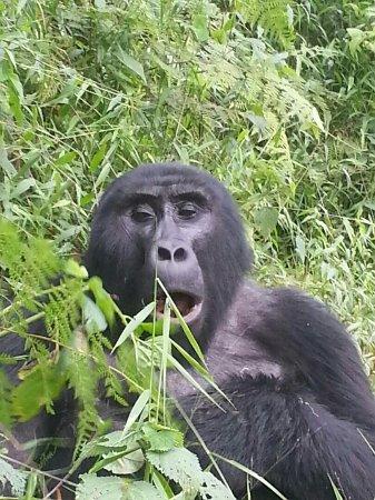 gorilla safari lodge desde 178 193 bwindi impenetrable