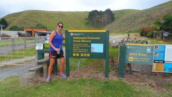 Kaeo, Yeni Zelanda: mahinepua penninsular coastal walk,kiwi zone