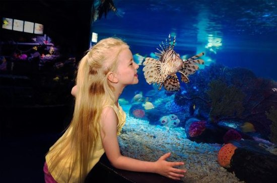 SEA LIFE Great Yarmouth Allgemeine ...